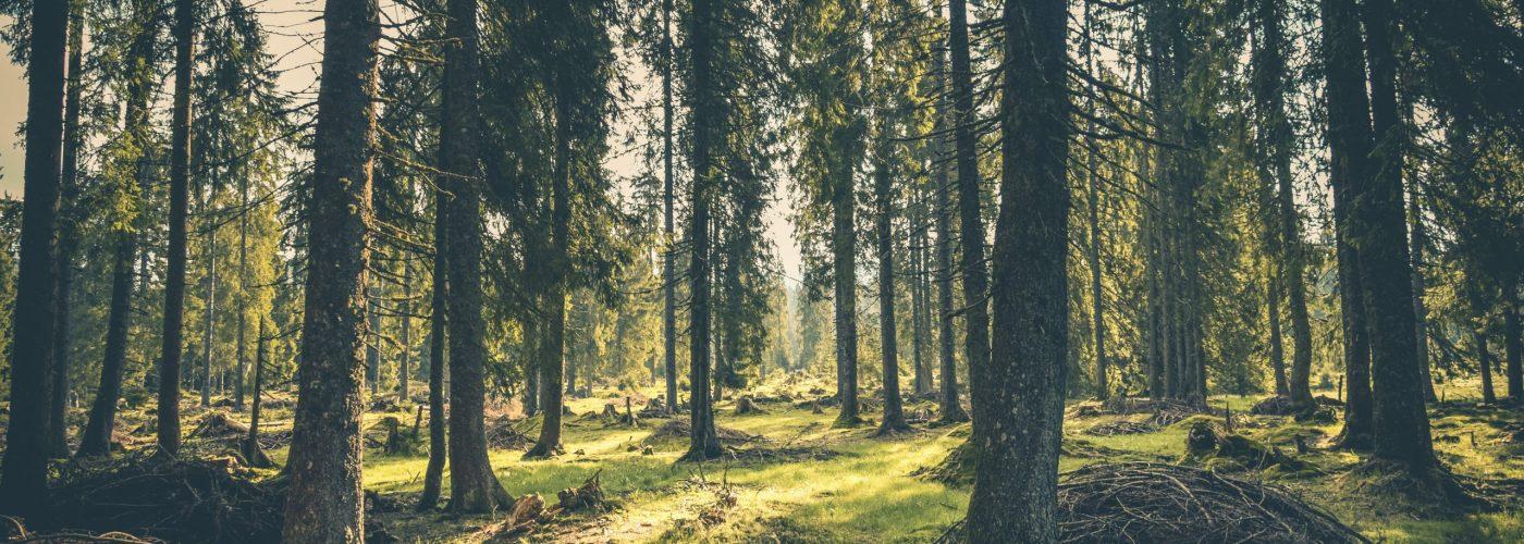 adventure-atmosphere-conifer-conifers-418831