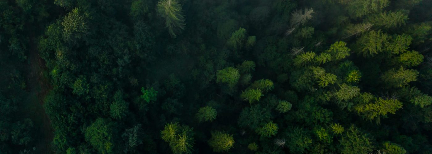 Top view of colorful mixed forest shrouded in morning fog